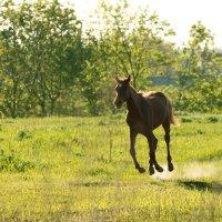 Летающий конь, ПЕГАС :: Василий Королевский