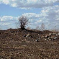 Чисто  поле - 2 :: Фотогруппа Весна.