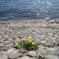 Весна на Петропавловке :: Маера Урусова