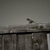 Метафора одиночества :: Мария Лазукова
