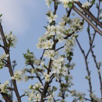 Весна :: Андрей Тер-Саркисов