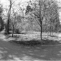 весенний парк :: Марина Буренкова