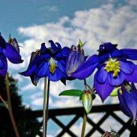 цветы и облака :: Александр Корчемный