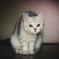 Машка :: Cat