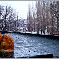 Соседский кот, ему разрешено гулять по крыше. :: Лариса Коломиец