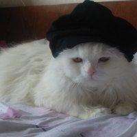 Любимый кот Жорик :: Елена