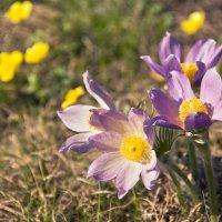 Весна долгожданная :: Nataliya Belova