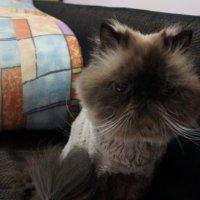 грустный кот :: Юлия Курдыбо