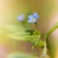 цветочек :: Денис Антонов