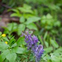 Первые цветы :: Екатерина Краева