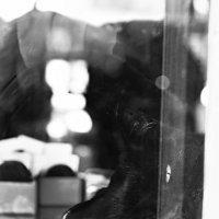 этак кошка в окне... :: Pavel Stolyar