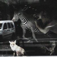 Охотники и убегающие :: Ирина Сивовол