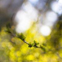 Весна :: Евгений Котейко