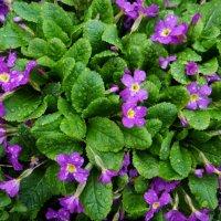 цветы :: Дмитрий .