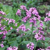 Весенние цветы :: Нина Поплутина