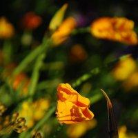 Тень на цветке :: Наталья Покацкая