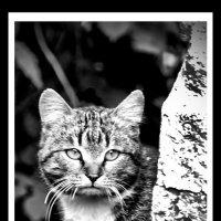 Грустный кот :: Владимир Оберемок