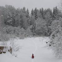 Прогулка в лесу :: Александр