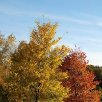 Красно-жёлтая осень. :: Александр Швыркунов