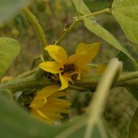 цветы :: Валерия Сыч