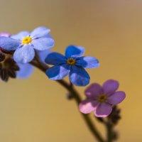 Цветик-семицветик :: Александр Земляной