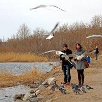 Северодвинск. У рефулёрного озера. Кормление голубей (и чаек) :: Владимир Шибинский