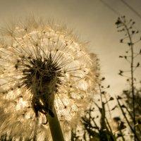 на большом воздушном шаре... :: Светлана Борец