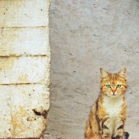 Дворовая кошка 3 :: Екатерина Аматова