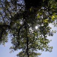Гармония - листья и небо. :: Алиса Фадеева
