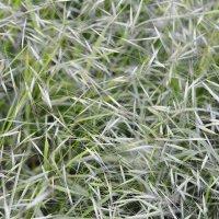 вьюга травы. :: Elenn S