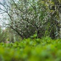 Весна :: Евгения О