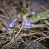 Весна* :: Евгений Пятов