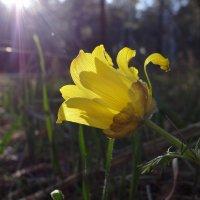 Весна пришла! :: Виктория Скупова
