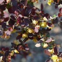 Весна :: Маргарита Королева