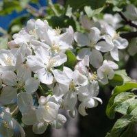 Краски весны :: Алексей Бродовой