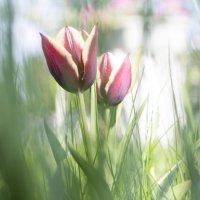 весна :: Римма Покачалова