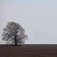 Дерево :: Наташа Попова