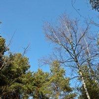 Синее синее небо :: Константин Фролов