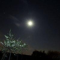 Майская ночь :: Евгения Беденко