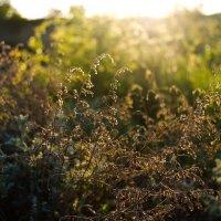 В лучах рассветного солнца. :: Александр Крупский