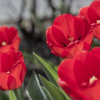 Весна*** :: Евгений Пятов