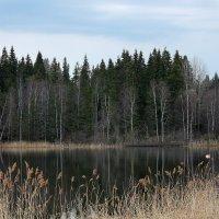 Весна в Карелии :: Светлана Карпенко
