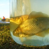 Истории о рыбалке.... :: Гузель Т