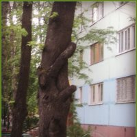 Я не могу расти в покое: ни солнца мне не виден свет, ни для корней моих простору нет.. :: Ольга Кривых