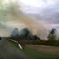 Сибирь - горит вдоль трассы :: Евгений Фролов