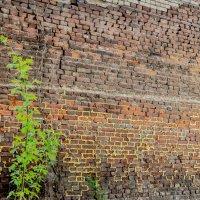 ...очень старая стена :: Александр Морозов
