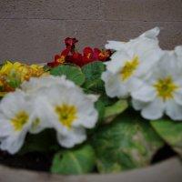 Весна) :: Nastya Bykova