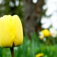 Пасмурный день и цветочек :: Владимир Гилясев