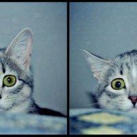 Котик :: Стася Кочетова