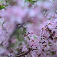Дерево без листьев,но с цветами=) :: Екатерина Марфута